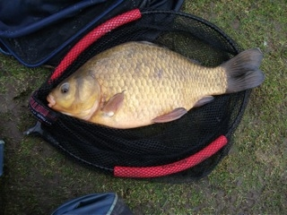 The controversial fish caught by Dave Harpin at Gold Valley