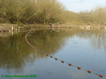 Netting the Wetland