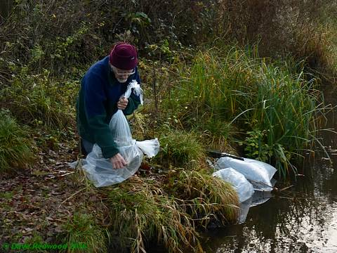 Re-stocking the Wetland