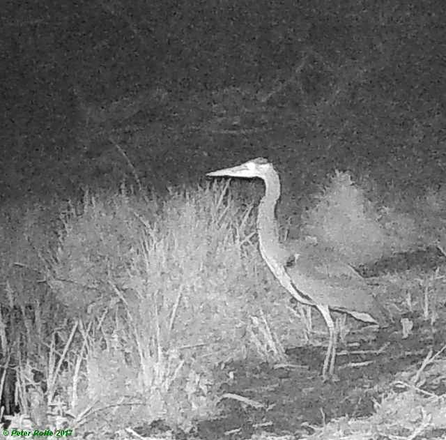 Wetlands trail camera