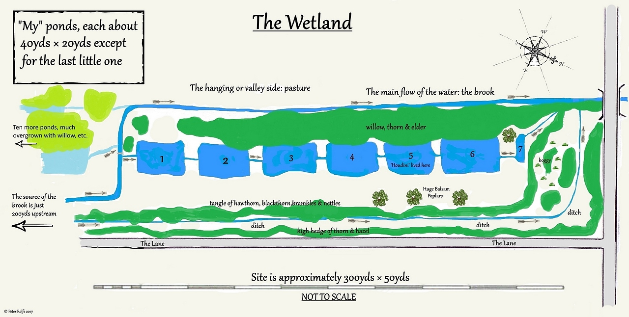 The layout of the Wetland